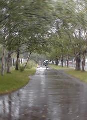 13 (Mrym.fm) Tags: باران دلتنگی