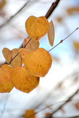 will snow after Fall (SusanCK) Tags: color dof fallcolor backgroud susancksphoto leavecolor