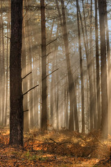 Wood wakening (StafbulCZ) Tags: wood morning sun nature fog canon czech rays hdr gettyimages eos400d anawesomeshot naturescreations stafbulcz jaroslavvondracek