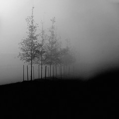 (ubik14) Tags: trees bw fog photography knoxville tennessee artlibre
