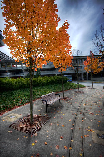 SFU in Autumn