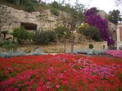 Cagliari   spettacolare fioritura di gerani ai giardini pubblici (Jedidi) Tags: flowers fiori cagliari