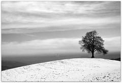 The Tree (Steffen Jakob) Tags: schnee bw snow tree berg geotagged schweiz switzerland blackwhite hill single blogged lonely apad uetliberg baum etliberg einzeln permpublic geo:lat=4731833 geo:lon=8502935 apad61