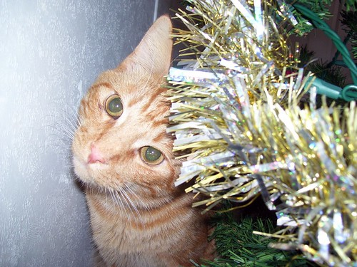 Mom, I didn't climb the tree