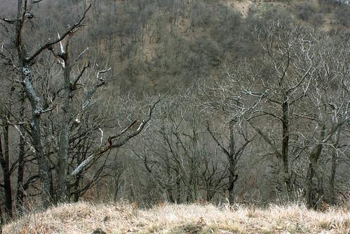 Dunakanyar, 2009. 03. 21. 0007