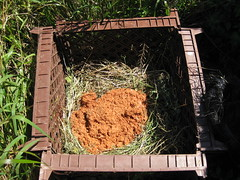 week two_bucket on compost