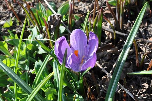 flower 2010.4.27