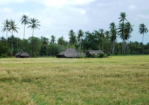 Timor Ouest-Kupang-Kefa (12)
