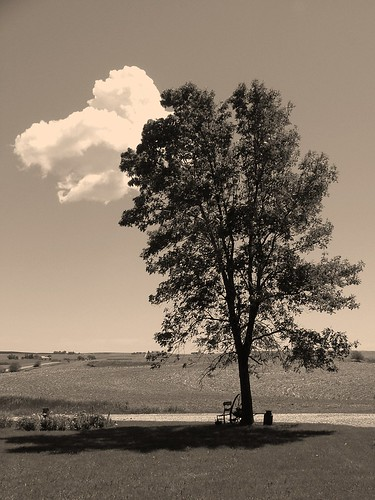 Black and white image of a tree on a farm