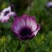 fiore sconosciuto/il ritorno