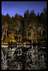 illusion vs reality (jody9) Tags: reflection diptych utata lifeforms utata:project=taketwo5