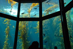 Enchanted Kelp Forest