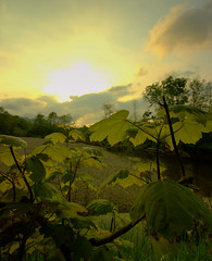 Sundown... (Truecraft Images) Tags: trees sunset plants leaves rural countryside perthshire