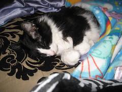 Sweet dreams (brandiredding72) Tags: kissablekat