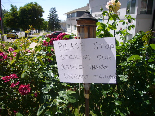PLEASE STOP STEALING OUR ROSES THANKS (SENIORS INCLUDED)