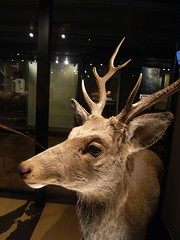 Tokyo 2008 - 國立科學博物館 - 日本館 (3)