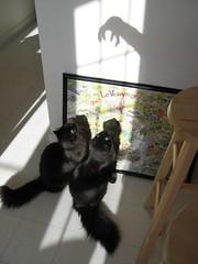 Kitten cuties (Skywalkerbeth) Tags: kitties cecily ophelia mykitties