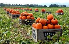 pumpkin harvest (buffalo_jbs01) Tags: elite motorcycle d200 sbr mywinners