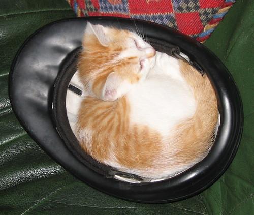 Je ne sais pas comment j'ai reussi a avoir cinq chats..... 2916076634_bca4f48ace