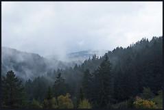 Blackforest (KurtFML) Tags: germany landscape rainy blackforest badenwürttemberg