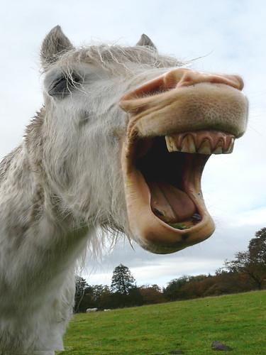 Bored pony yawning