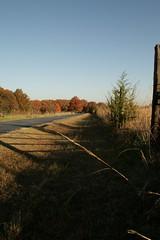 11-1-08 (mommy peace) Tags: fall oklahoma nature outside berries walk shawnee 110108 nov08