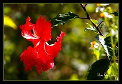 Bokeh Galore (iTail ~ Steve Page) Tags: red flower nature leaves petals bokeh soe backlighting cubism centralflorida naturesfinest itail flowerscolors photographyrocks winterparkflorida mywinners worldbest platinumphoto anawesomeshot colorphotoaward impressedbeauty diamondclassphotographer goldstaraward flowersmacroworld macroflowerlovers 4mazingorgeoushotsoflowers wonderfulworldofflowers rubyphotographer mimamorflowers awesomeblossoms alittlebeauty newenvyofflickr