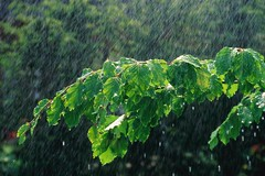باز باران با ترانه با گوهرهای فراوان...........