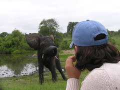 Young elephant and Me (gabriela.maestre) Tags: africa elephant animals south singita