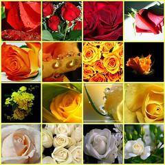 Alba, torna presto! (..:*  *:..) Tags: flowers red roses orange wh