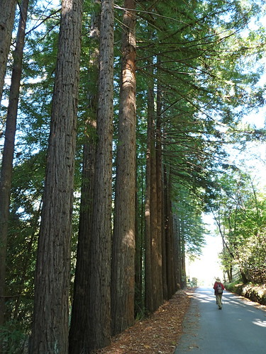 redwood row