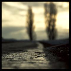 wintermorning (Diana~!) Tags: morning trees winter colour ice square hills 500x500 multimegashot winner500