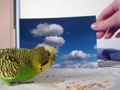 Domesticated Freedom (wu.jennifer) Tags: photochallenge glocalproject ubcvisa110