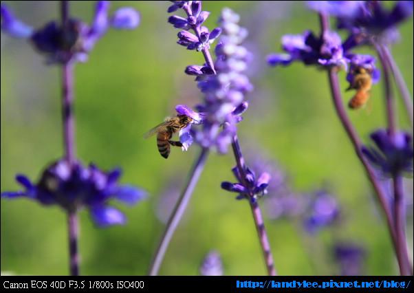 9711-新社花海:Date with Bee_043.jpg