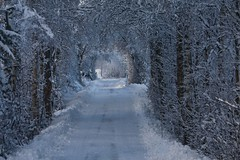 Walking in a winter wonderland... (Joaaso) Tags: road trees winter snow cold nature norway forest norge vinter natur creativecommons skog vei winterwonderland sn kulde lightroom trr 10faves canoneos450d platinumheartaward canonefs55250mmf456is flickrclassique eventyrlandskap