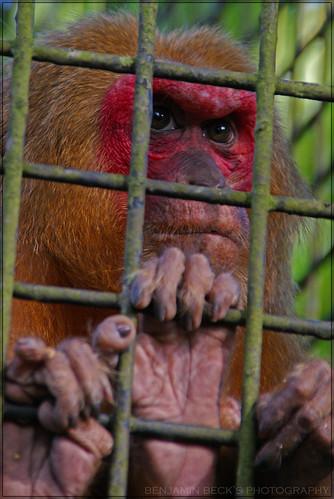 Photography in Zoo Negara