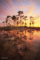 Wet Season (Paul Marcellini) Tags: longexposure sunset reflection florida everglades evergladesnationalpark southflorida miamidade pineland streakingclouds paulmarcellini