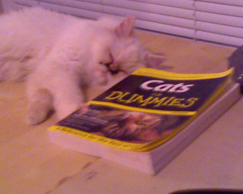 Curled Up with a Good Book