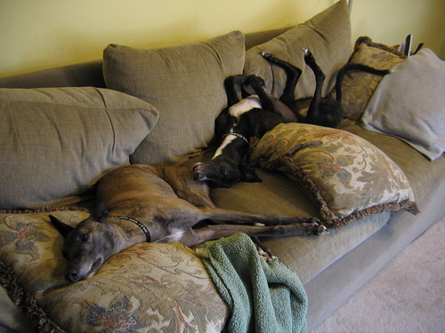 greytblackdog: the curse of the orvis dog beds