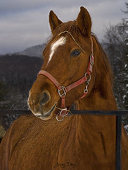 His name is Cappuccino (Johny Day) Tags: horse caballo cheval cappuccino blueribbonwinner supershot oneofmybest johnyday infinestyle johnyday© explore2008 vosplusbellesphotos clubéquestrechanteclerc clubequestrechanteclerccom