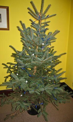 That tree is nekkid!
