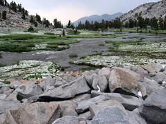 July storm clearing (sheenjek) Tags: yosemite lyell lyellfork golddragon mtlyell