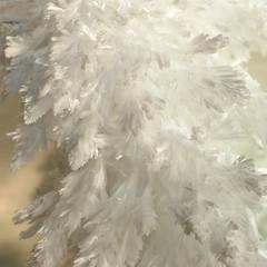 White on Cream (Ann Rob) Tags: white crystal feather cwd cwd1021