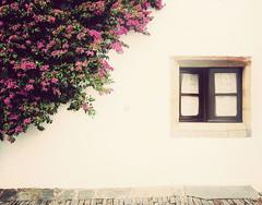 Subtle (Ana Santos) Tags: flowers portugal w