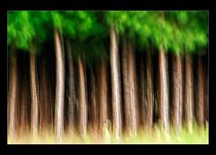 Pines (hades.himself) Tags: abstract blur pine nikon luis nikkor abstrato riograndedosul hades pinheiro borrado sulfotoclube sofranciscodepaula 70300mmf4556gvr d700 balbinot