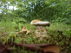 94 (moons_creations) Tags: mushroom virginia backyard fungi toadstool fugus