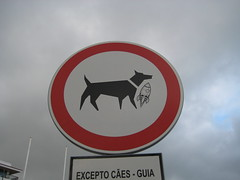 No Rocket Dogs