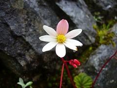 Trek Inka Trail fleur