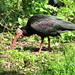 oiseau rare ibis chauve au parc natuel souss massa