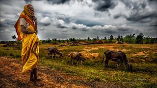 Herding her buffaloes - Tirukalukundram